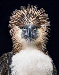 富含人文关怀的动物摄影