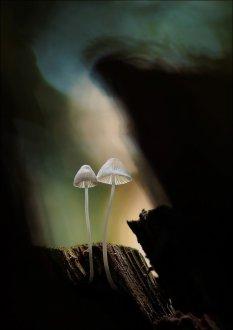 """大自然童话般的""""小雨伞"""""""