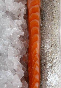 鲜美肉质日料三文鱼图片