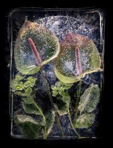创意冰封花朵诠释永恒之美