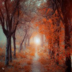 梦境般的红色林荫路