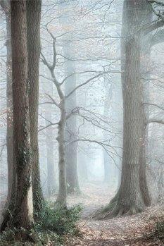 镜头之下的层林尽染