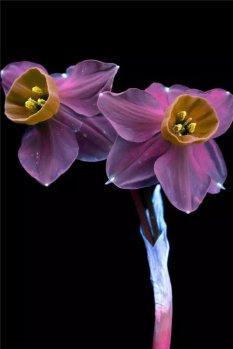 暗室花影自然摄影